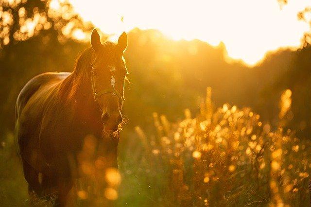 קורס אילוף סוסים